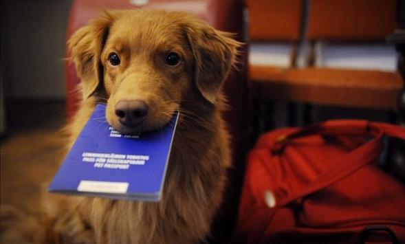 Картинки по запросу реєстрація домашніх тварин в україні