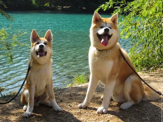 фото: breedsofdogss.blogspot.com