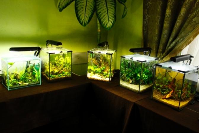 72c682cebe2c93 Львів'ян запрошують на виставку акваріумних рибок