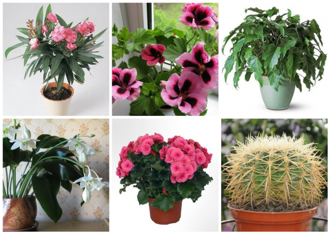 5 порад від експерта  як правильно вирощувати кімнатні рослини dda4393e78cb9