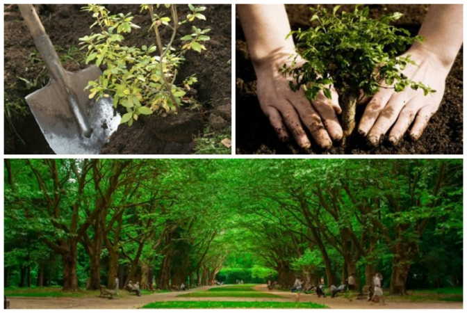 фото: agronomist.in.ua,rivne1.tv, youtube.com