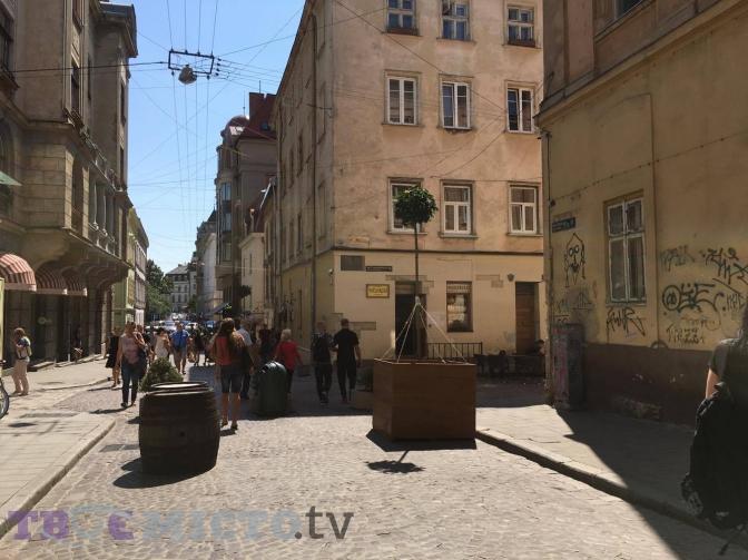 Дивись: у центрі Львова висадили дерева у контейнерах фото 2