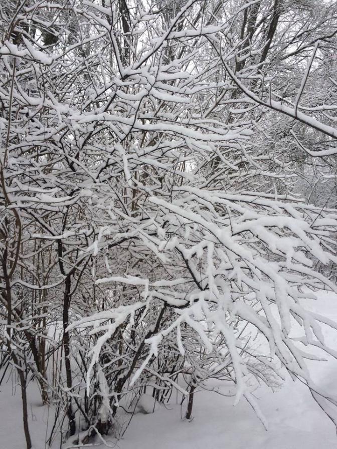 Зимовий настрій: соцмережі заполонили фото засніженого Львова й Карпат фото 10