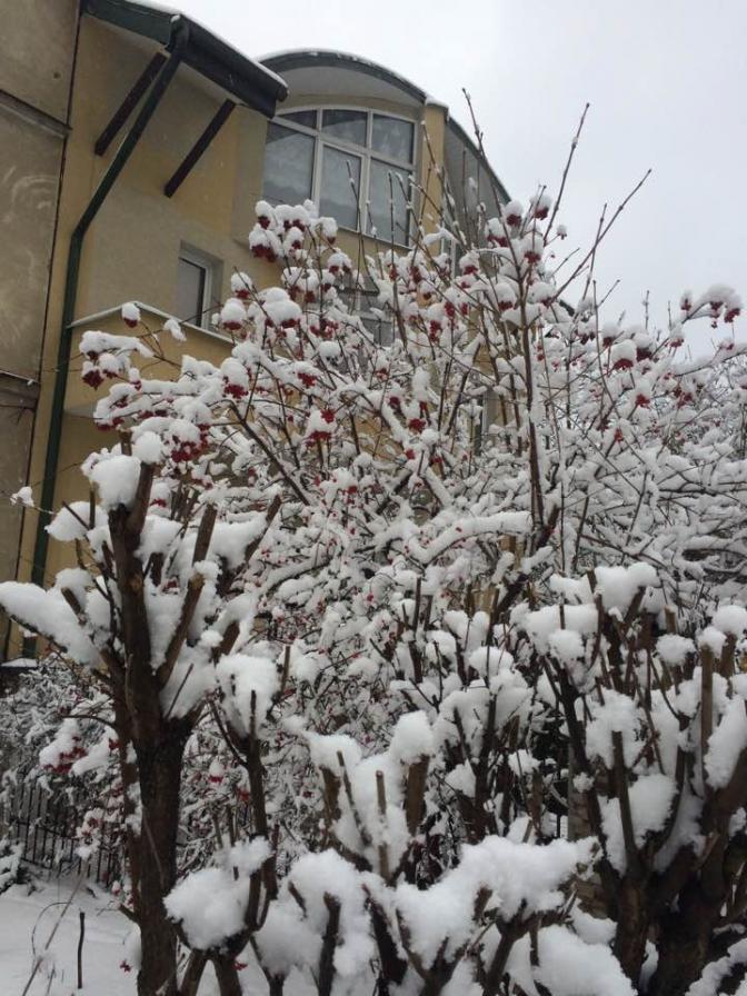 Зимовий настрій: соцмережі заполонили фото засніженого Львова й Карпат фото 7