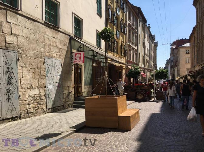 Дивись: у центрі Львова висадили дерева у контейнерах фото