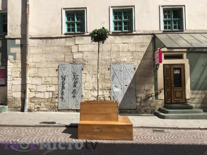 Дивись: у центрі Львова висадили дерева у контейнерах фото 1