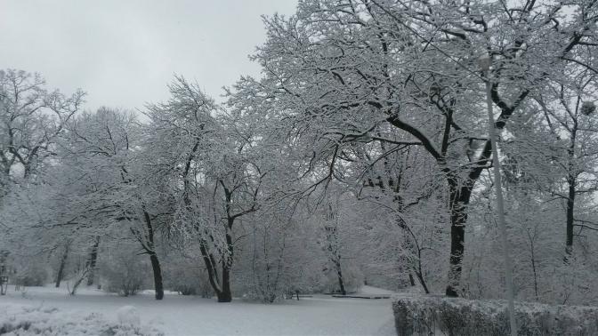 Зимовий настрій: соцмережі заполонили фото засніженого Львова й Карпат фото 11
