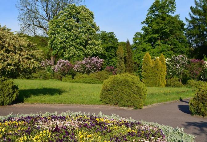 Фото: facebook-сторінка «Ботанічний сад ЛНУ ім.І.Франка»