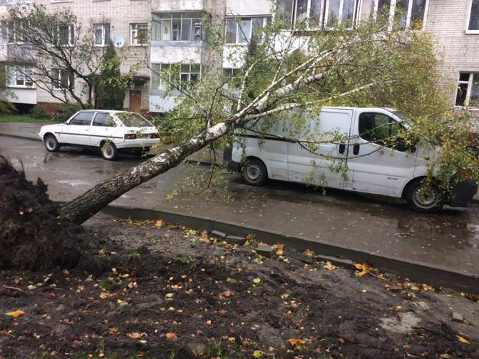 Дивись: що накоїла негода у Львові фото 1