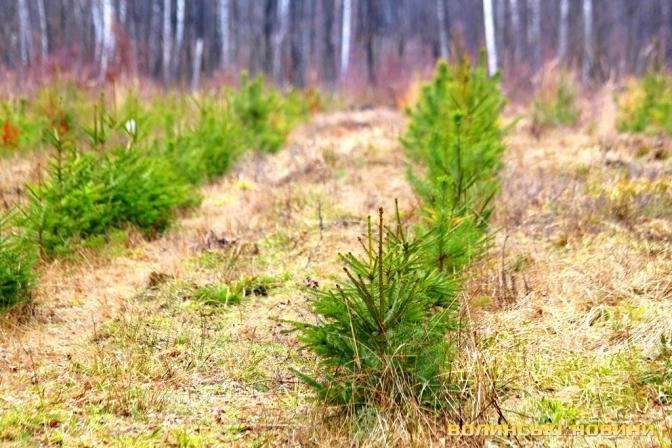 Цієї весни на Прикарпатті планують висадити понад 360 гектарів лісу