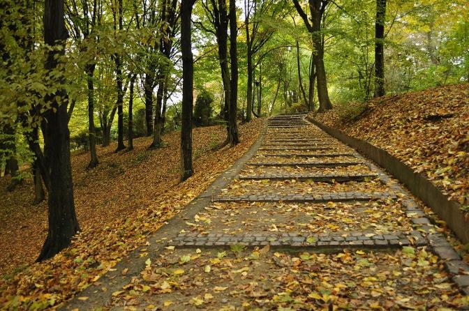 Топ-5 місць для осінніх прогулянок у Львові фото