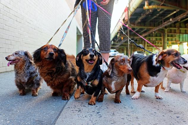 Royal Canin X-Small Puppy 0. 5 кг – купить корм для собак