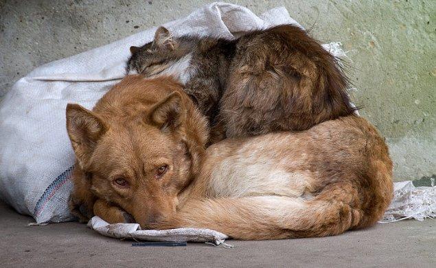 Франківці приєдналися до всеукраїнської акції захисту тварин (відеосюжет)